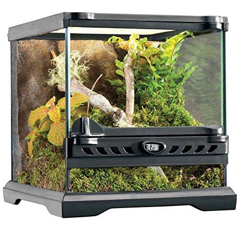 Exo Terra - Micro terrario in Vetro con ambientazione per rettili, Dimensioni20x 20x 20cm