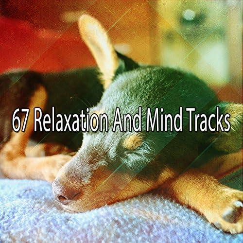 Relax musica zen club