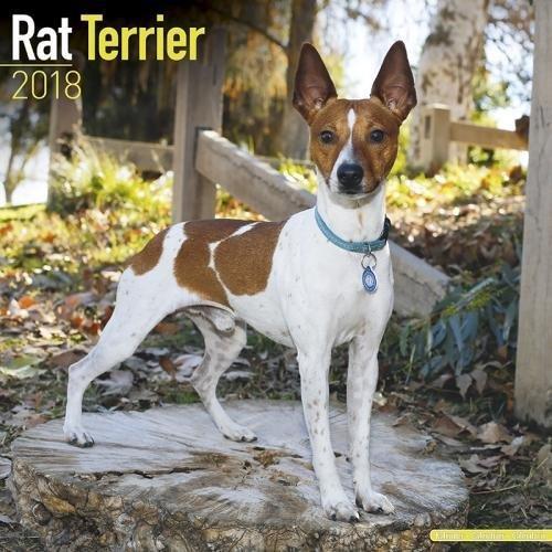 Rat Terrier Calendar - Dog Breed Calendars - 2017 - 2018 wall Calendars - 16 Month by Avonside