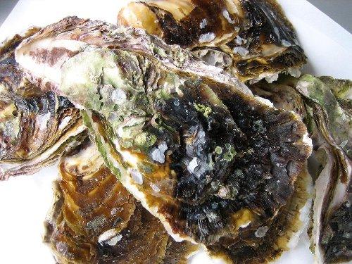 生食用 岩牡蠣L-3kg 15個程度 山陰境港産