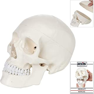 Axis Scientific Human Skull Anatomy Model - 3 Part Life Size Anatomically Correct Replica, Skull Cap with External and Interior Structures, Detailed Product Manual, and Worry Free 3 Year Warranty