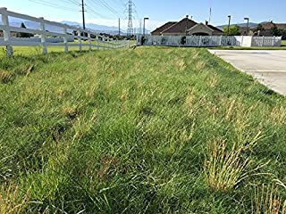 Nature's Seed TURF-LM-5000-F Grass Seed Blend 5000 sq. ft.