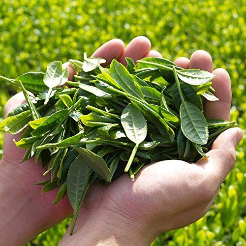 『[2CS]伊藤園 おーいお茶 緑茶 (2L×6本)×2箱』の1枚目の画像