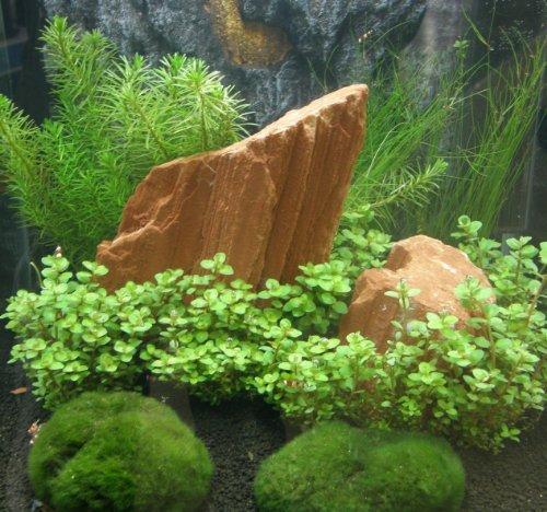 Mühlan - Nano, 4 Töpfe + 4 Bund + 2 Mooskugeln + Wasserpflanzen Dünger pflegeleichtes Anfängersortiment für Nanoaquarium