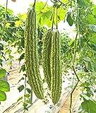 Bitter Melon Bitter Squash Balsam Pear Bitter Gourd Seeds 15PCS Non GMO (Green)
