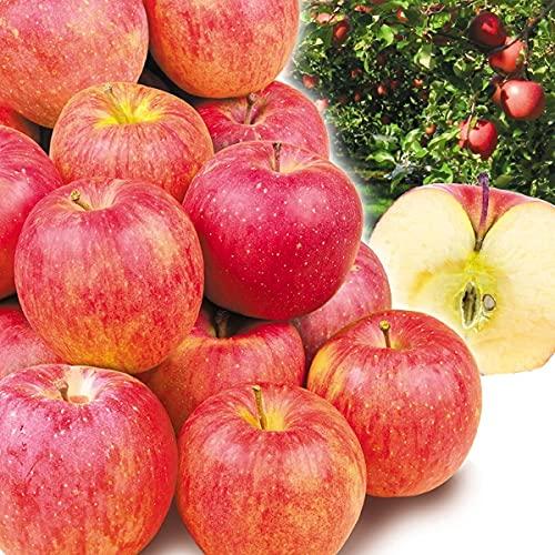 国華園 りんご 青森産 ご家庭用 サンふじ 5�s 1箱 食品