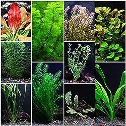 Floating Aquarium Plants (10 Species pack)