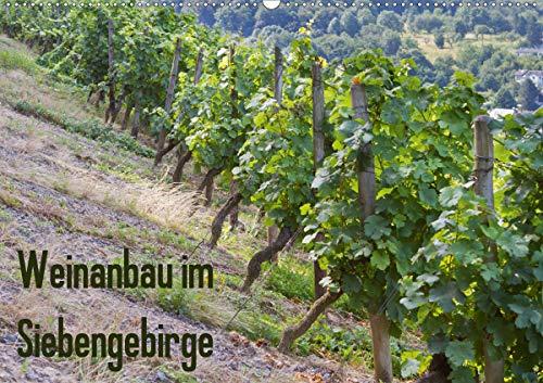 Weinanbau im Siebengebirge (Wandkalender 2021 DIN A2 quer)