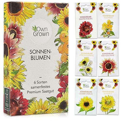Sonnenblumen Samen Set: Premium...