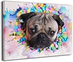 Best doug the pug pictures Reviews
