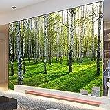 YunYiBZ Benutzerdefinierte Wandtapeten Birkenwald Naturlandschaft Fototapete Restaurant Wohnzimmer Schlafzimmer Innendekor Panel Wand,460cm(W) x280cm(H)