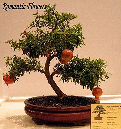 Promotion! Vente chaude Hydrangea 300pcs Hydrangea Mixed Seeds Fleurs Jardin des plantes Bonsai Viburnum macrocephalum Fort