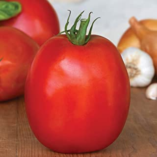 Burpee Exclusive 'SuperSauce' Hybrid | Large Red Sauce & Paste Tomato | 25 Seeds