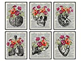 Heart, Skull, Brain, Lungs, Kidney, Liver Wall Art Decor - Human Anatomy Room Decorations - Medical Office Decor - Shabby Chic Gift for for Doctor, Nurse, Women, RN - Poster Picture Prints Set