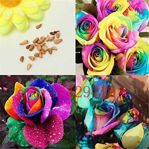 200 RAINBOW graines de rose Rare Holland Rainbow Rose Flower Lover Plantes multicolores Accueil Jardin rare arc-en-ciel rose fleurs