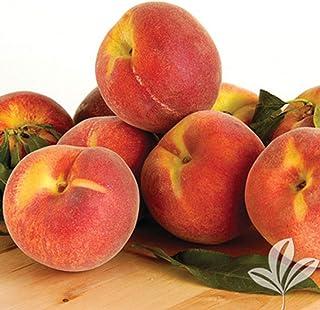 1 Plant Red Ruston Peach Fruits Tree 5 Gallon Plant Outdoor Gardening tktreas