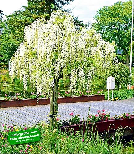 BALDUR-Garten Weißes...