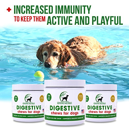 Digestive Supplement for Dogs Best Probiotic for Dogs That Helps with Diarrhea Upset Stomach Bad Breath and Constipation by Genuine Naturals120-Count