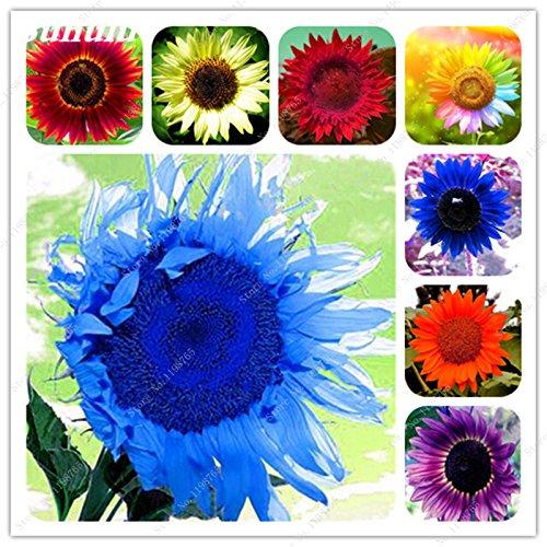 Nouveautés 40 Pcs Graines de tournesol bio mixte Helianthus annuus Graines d'ornement semences de fleurs de tournesol russe plante pour jardin 12