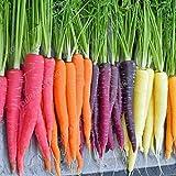 200pcs super géant carotte Semences potagères Heirloom russe Graines bio pour jardin Plantes douces et en bonne santé de fruits mélangés Graines