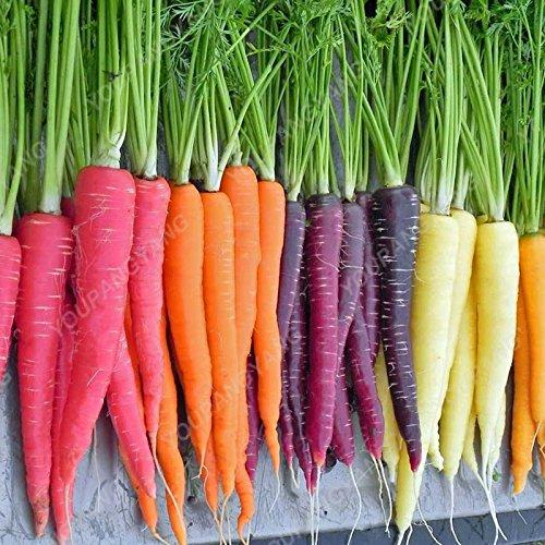Légumes et graines de fruits noirs graines de carotte Anti-âge ginseng Nourrissant Bonsai plantes Semences Maison et jardin 200 graines/Mitigé