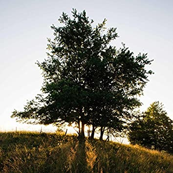 Family Tree (feat. C.Shreve the Professor & Mike Live)