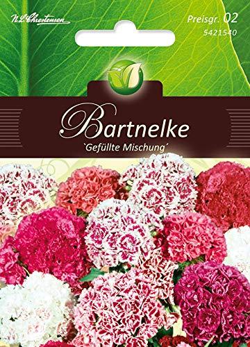 Dianthus, Bartnelken,Gefülltblüh.Mg.