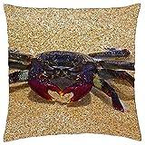 N\A Cojín Cojín Crab Beach Fuerteventura España Naturaleza Animal
