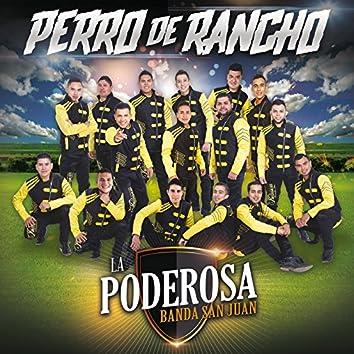 Perro De Rancho