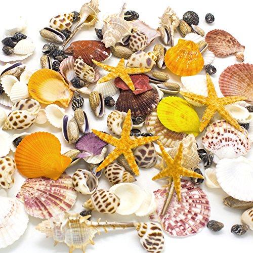 Mixed Beach Seashells