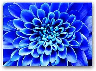 Best blue iris picture Reviews