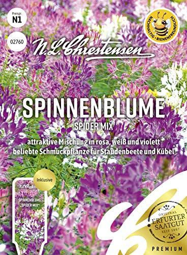 Spinnenblume Spider Mix, attraktive Mischung in rosa, weiß und violett, bienenfreundlich, Samen