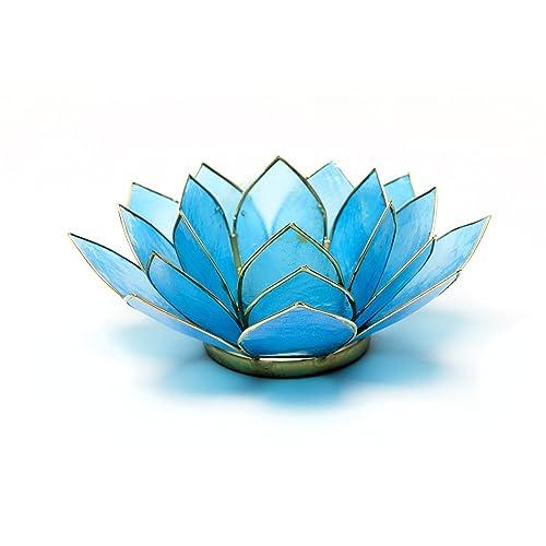 Blue Lotus Amazoncouk