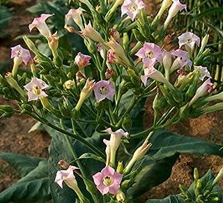 Amazon.es: Plantas de exterior: Jardín: Césped, Verduras, Flores ...