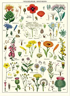 Cavallini Decorative Wrap Poster, Wildflowers, 20 x 28 inch Italian Archival Paper (WRAP/WF)