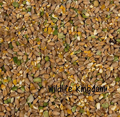 Wildlife Kingdom Mélange volaille très énergétique et de qualité supérieure à base de maïs, d'huîtres, de pois Alimentation pour poulet, poule, canard et oie