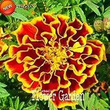 Plants Garden Perennials Big Flower Pot Big Sale!11 Kinds Maidenhair Herb Garden Pot Marigold Flower Seeds Potted Chrysanthemum Seeds 50 Seeds/Bag,#6PLTUR (Mix Color)