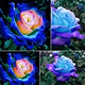 GMNP0di% Rose Seeds for Planting Rare Blue Pink Roses Plant Seeds Balcony Garden Potted Rose Flowers Seed