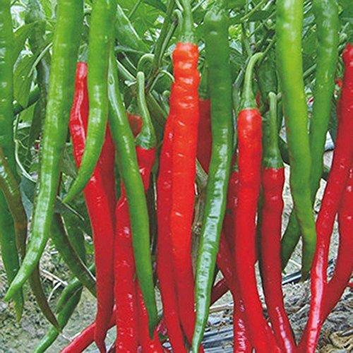 1bag 200 Red Hot haut Épices à bas prix Spicy Chili Pepper Graines Plantes qualité et jusqu'à 50cm 20 long