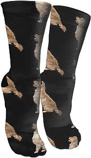 靴下 抗菌防臭 ソックス ゴールデンレトリバー犬アスレチックスポーツソックス、旅行&フライトソックス、塗装アートファニーソックス30センチメートル長い靴下