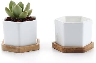Best small succulent pots Reviews