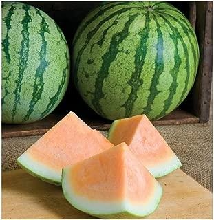 David's Garden Seeds Fruit Watermelon Orange Crisp (Seedless) UE7653 (Orange) 25 Non-GMO, Hybrid Seeds