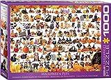 EuroGraphics-Halloween Pets Rompecabezas, Multicolor, 1000 (5416)