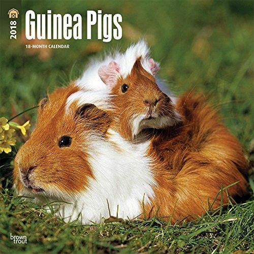Guinea Pigs - Meerschweinchen 2018 - 18-Monatskalender: Original BrownTrout-Kalender [Mehrsprachig] [Kalender] (Wall-Kalender)
