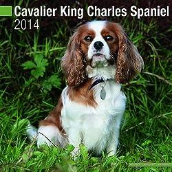 Cavalier King Charles 2014 (Calendar 2014)[Avonside Publishing][Amazon]