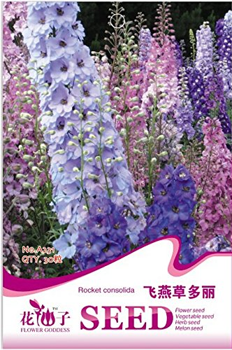 Delphinium Consolida Rocket Seeds Larkspur Fleur annuel, emballage d'origine, 30 graines / Pack, Wildflower A231