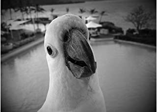 ING Wall Art Print on Canvas(32x21 inches)- Cockatoo White Black Portrait Funny Bird Animal