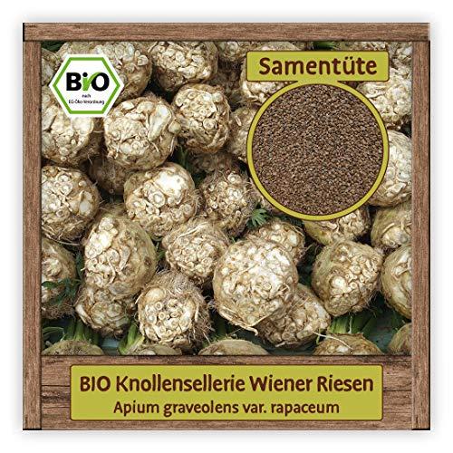 BIO Knollensellerie Samen Sellerie Gemüse alte historische Sorte Wiener Riesen