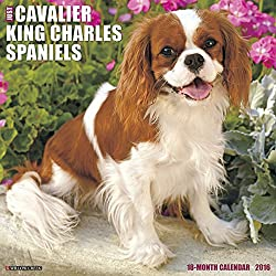 Just Cavalier King Charles Spaniels 2016 Calendar[Willow Creek Press]