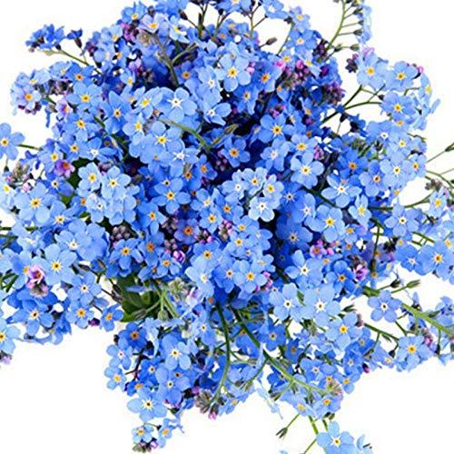 Promworld Wildblumenwiese,Doppelblütige Eustoma-Blütenart - Mit Becken - Vergissmeinnicht - Nicht 200 Kapseln,Blumensamen winterhart mehrjährig